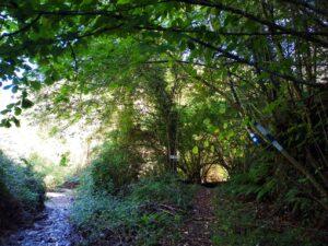 image: wild trail path