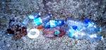 Garbage 20201114_163024.jpg